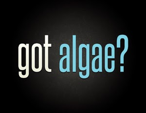got-algae_energy2