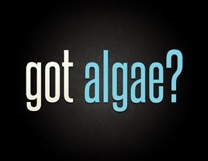 got-algae_energy2