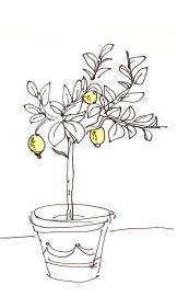 lemon-tree-drawing-14